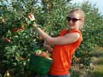 Apple Orchards in Chicagoland area