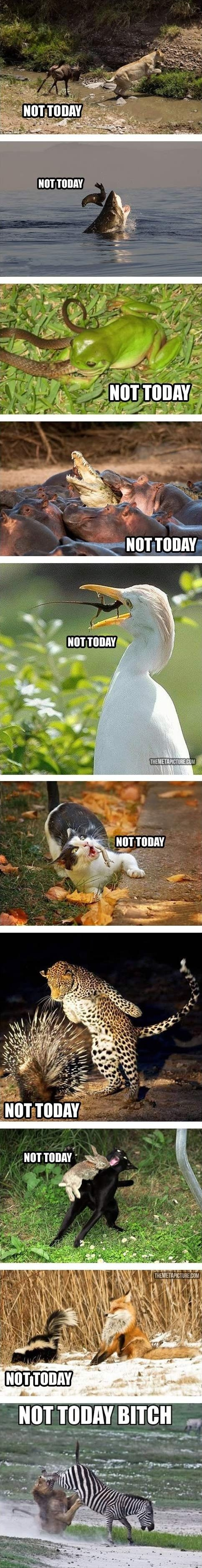 Not today. hahaha :) This is perfect for how I feel today.