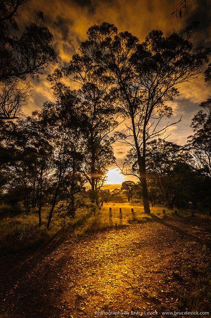 ~~Aussie Warmth | golden sun lighting a path through the trees, Brisbane, Australia by brusca~~