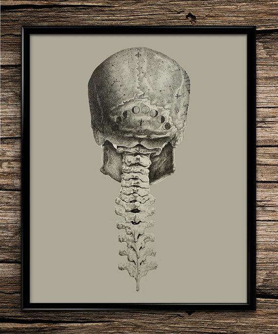 Vintage Skull Anatomy  Vintage Skull Anatomy | Human Body | Skeletal System | Spine | Anatomy Poster | Anatomy Art | Medical Decor | Home Decor