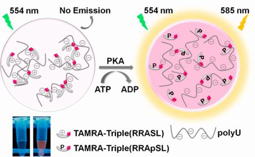 Facile and Sensitive Method for Protein Kinase A Activity Assay Based on Fluorescent Off-On PolyU-peptide Assembly