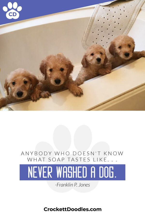 Pups From Crockett Doodles Dog Lover Quotes Doodle Puppy Dog