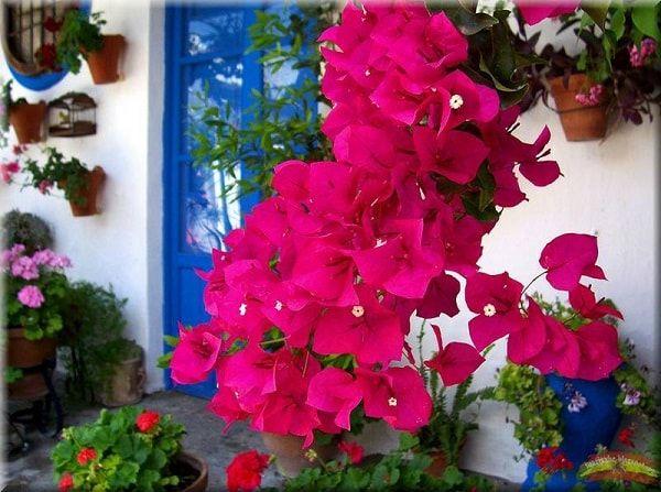 Decorar Jardines y terrazas con mucho color 5