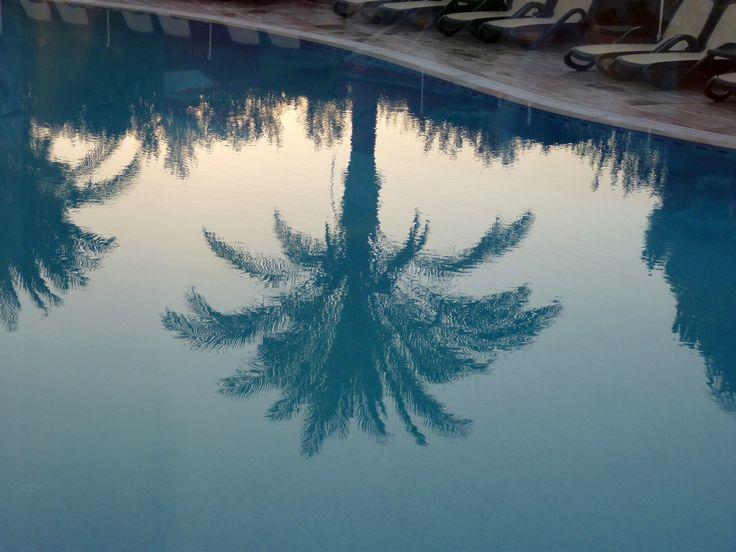 #Urlaub #Türkei #Side Palme im Pool