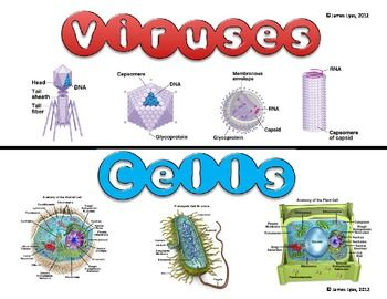 FREE Viruses and Cells (Compare & Contrast)