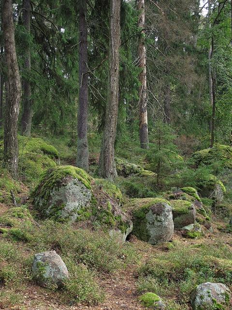 Stony forest in Langinkoski, Finland