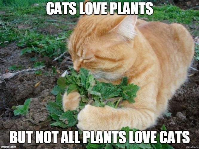 Detox Your Home With Pet Safe House Plants Catnip Cats Cat Love