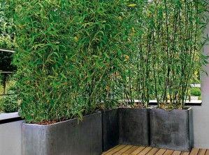 ... En Pot, Pots De Jardin, Terasse Garden, Bambous Terrasse, The Balcony