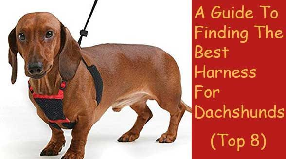 The Best Harness For Dachshund Pets Top 8 Ultimate Guide