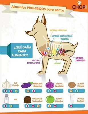 Alimentos que Dañan a los Perros - Adiestramiento canino anubis @AnubisCanino