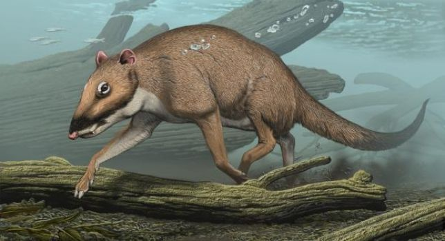 Whales Descended From Tiny Deer-like Ancestors