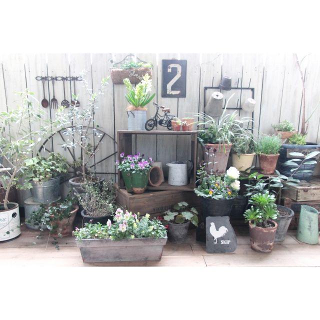 RIKAさんの、多肉植物,植物,ココファイバー,キャベツボックス,NO GREEN NO LIFE,ブログしてます,みどりの雑貨屋,ヒヤシンス,モスポット,お花,雑貨,庭,ベランダガーデン,ガーデニング,壁/天井,のお部屋写真