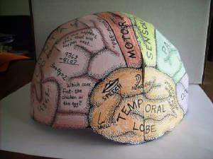 "DIY - Free downloadable pattern for a paper ""Brain Hat!"" (Source : http://www.ellenjmchenry.com/homeschool-freedownloads/lifesciences-games/brainhemishpere.php)"