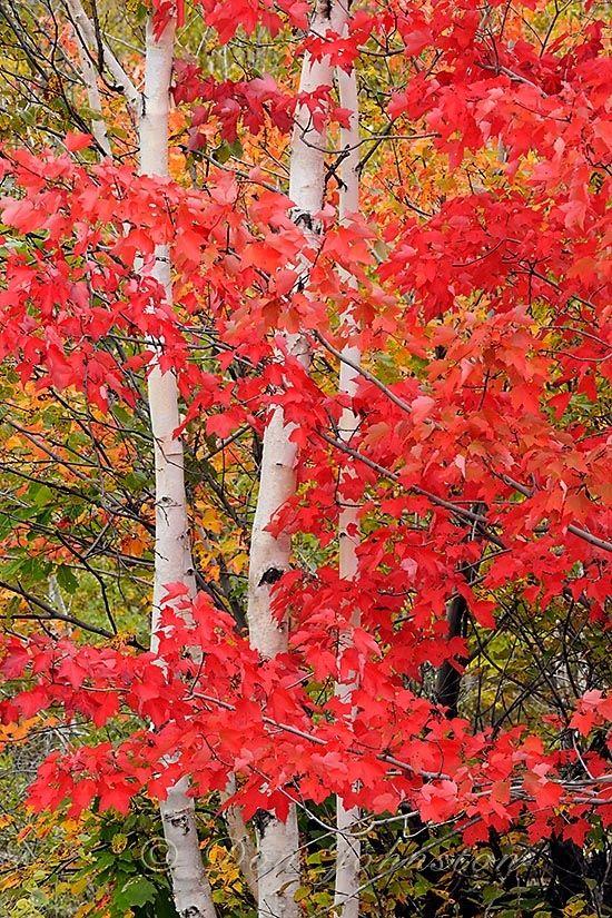 Gorgeous autumn hues