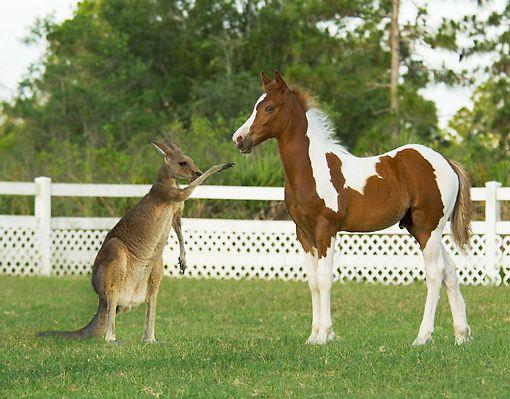 baby & kangaroo