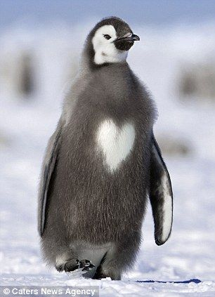 that is too cute, a heart on it's chest!!! <3