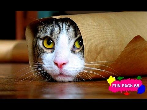 Funny Cats Compilation [seen by most] Funny Cat Videos - http://positivelifemagazine.com/funny-cats-compilation-seen-by-most-funny-cat-videos/ http://img.youtube.com/vi/IcdDQ-2bZAg/0.jpg  Kucing Lucu Dan Anak Kucing Mengeong. Kompilasi Lucu Banget – Video Kucing Lucu Banget Imut Baru Nih Video Lucu Kucing Joget – Kucing Lucu Banget … ***Get your free domain and free site builder*** [matched_content] ***Get your free domain and free site builder*** Please f
