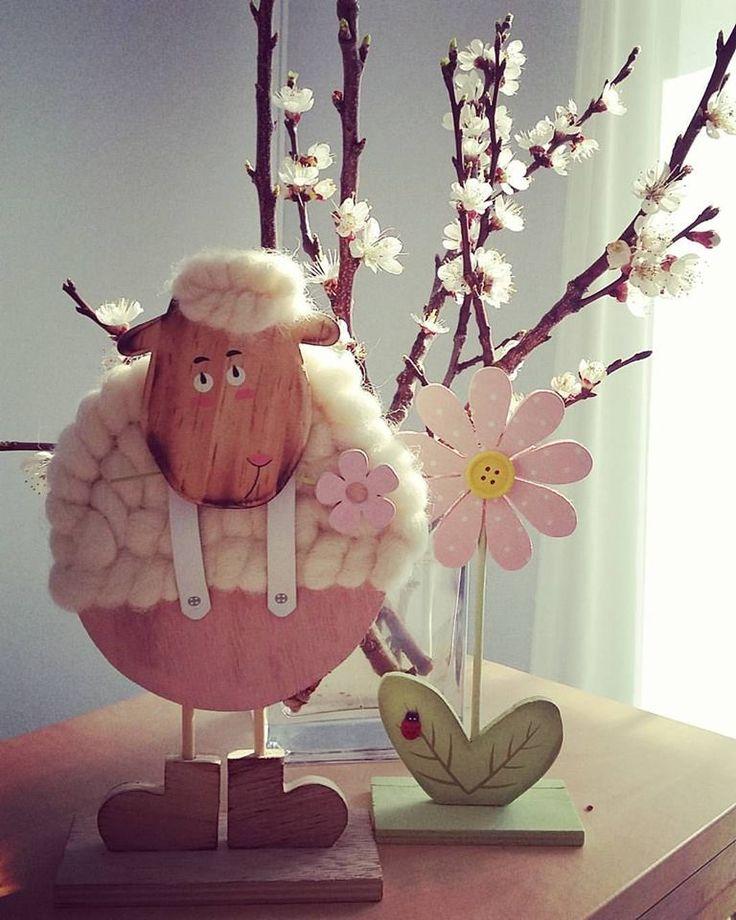 #tavasz #bari #barackvirág #jóidő