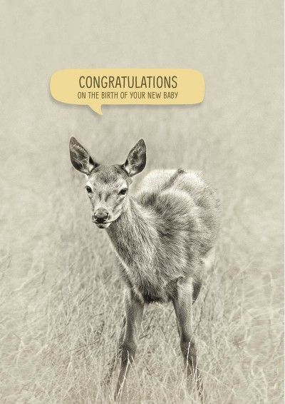 A young deer and the text 'Congratulations on the birth of your new baby'.