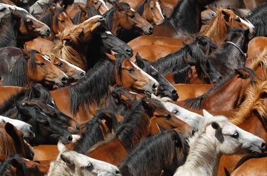 Menjinakan Kuda Liar di Spanyol
