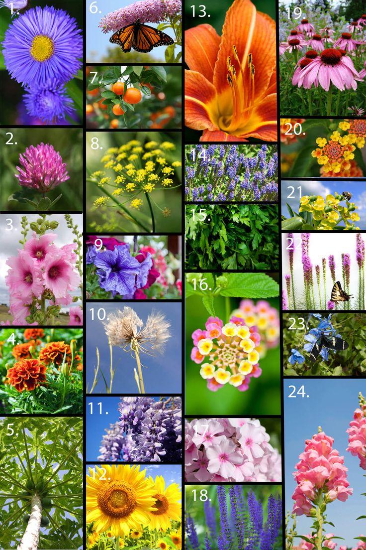 A few dozen flowers that work wonderfully in the butterfly garden.