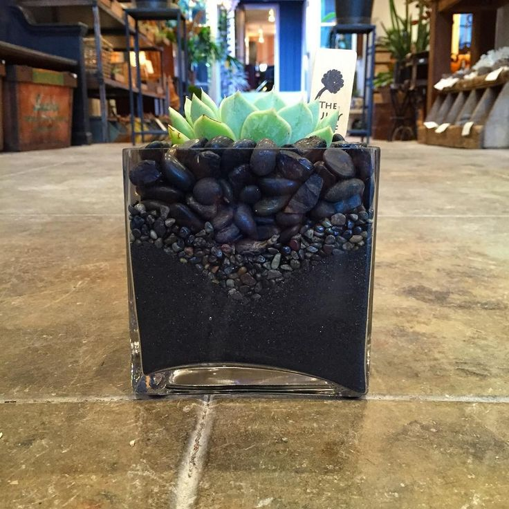 Send Succulent in a Square Vase with All Black Sand & Black Rocks in Venice, CA from The Juicy Leaf, the best florist in Venice. All flowers are hand delivered and same day delivery may be available.