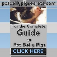 Potbelly Pigs:Pot bellied pigs Secrets