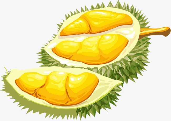 open durian vector and png durian fruits drawing fruit open durian vector and png durian