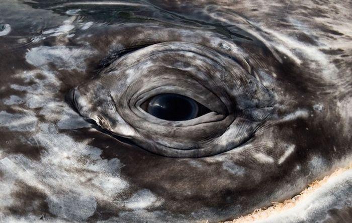 Un photographe a immortalisé des images incroyables de baleines et de dauphins pendant 25 ans... 18 photos à couper le souffle !