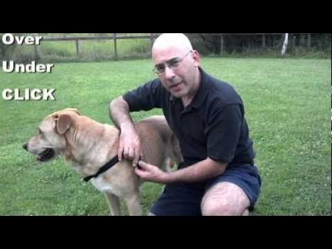 www.WalkYourDogWithLove.com for Happy Dog Walking Walk Your Dog With Love is The Worlds' Best Dog Harness. It is a No Choke, No Pull, More Control dog harnes...