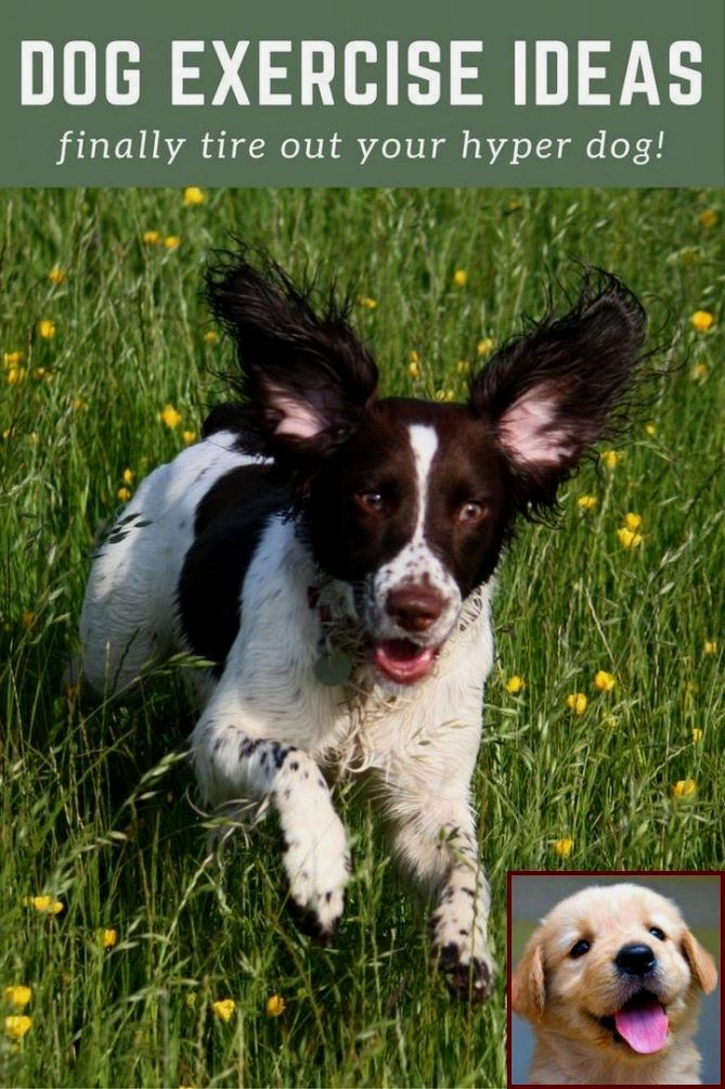 1 Have Dog Behavior Problems Learn About House Training A Boy