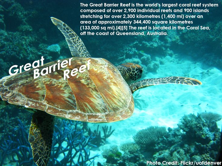 The #GreatBarrierReef is the #world's largest coral reef system composed of over 2,900 individual #reefs and 900 islands stretching for over 2,300 kilometres (1,400 mi) over an area of approximately 344,400 square kilometres (133,000 sq mi). The reef is located in the Coral #Sea, off the coast of #Queensland, #Australia.