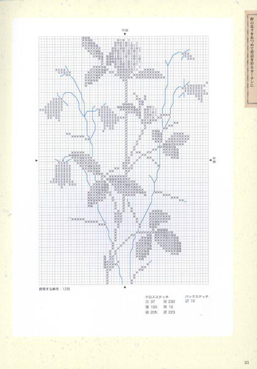 trifolium pratense 2