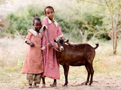 1 Goat - Goats provide nutritious milk to keep growing children healthy and strong.