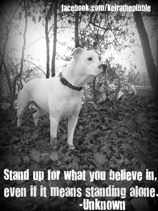 Pitbulls. the thing id say im most passionate about. speak out for them, because they cant speak for themselves.