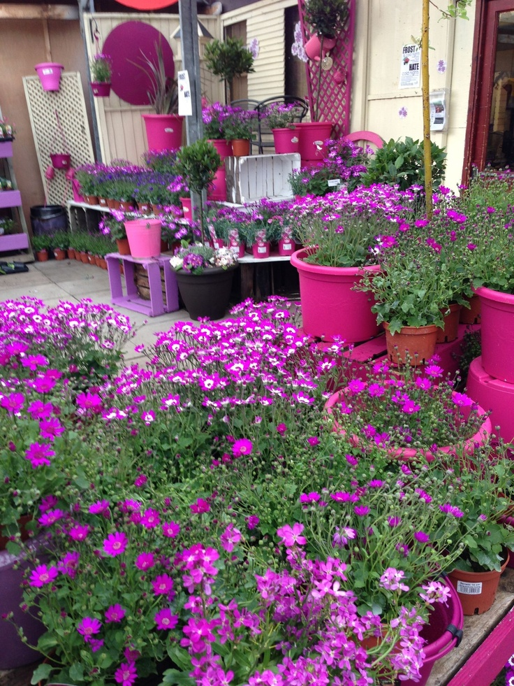 Ferndale garden centre...clever colour blocking!!! Bebe'!!! All Pink Flower Area!!!