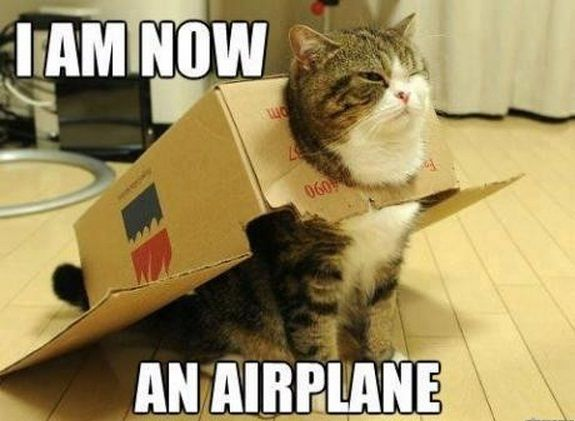 Hilarious New LoLCats