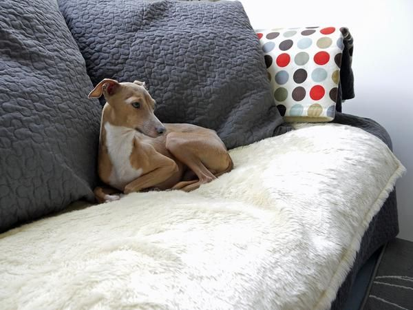 Dog Comforters Are Perfect For Freshening Up An Existing Bed Protecting Your Sofa
