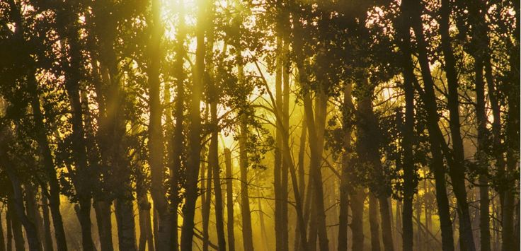 L'étonnant sommeil des arbres