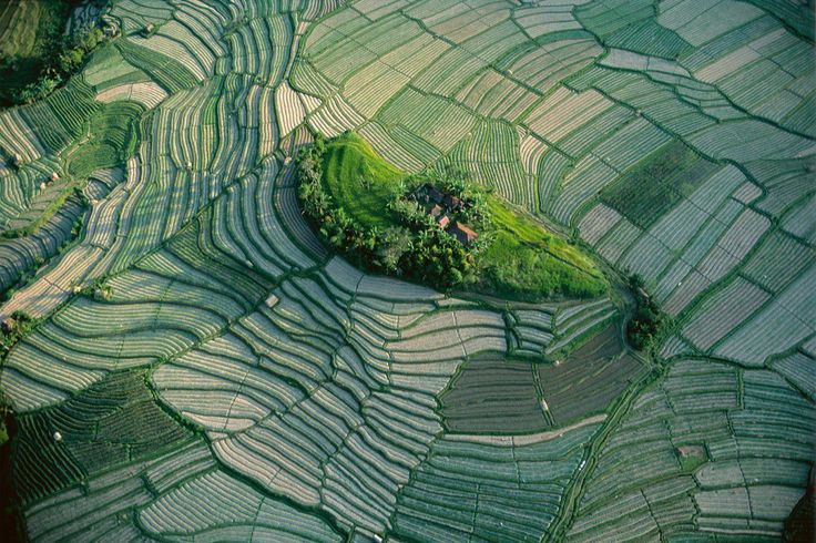 lôt dans les rizières en terrasse de Bali, Indonésie.  Vu du ciel - ATELIER Yann Arthus-Bertrand