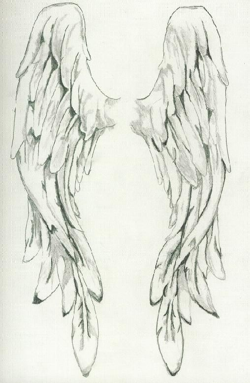 Angel wings drawings bing images