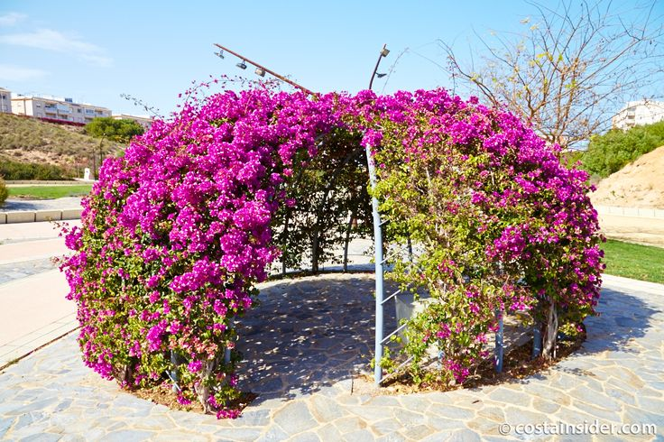 Aromatic Park - Torrevieja Insider