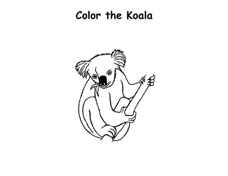 Free Printable Koala Coloring Pages For Kids Animal Coloring