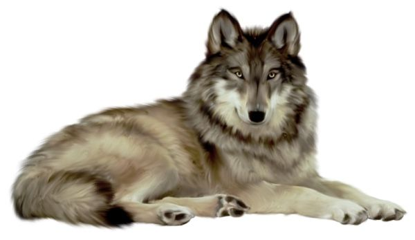 Pin By Ofe Young On Cover Resources Animals Wolf Clipart Cartoon Animals
