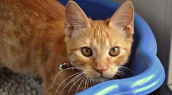 Las piedras sanitarias comerciales para gatos tardan años en degradarse. Además, están hechas con químicos que pueden ser dañinos para tu salud y la de tu mascota. Esta opción, más sustentable,...