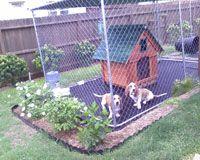 clean-dog-kennel-2