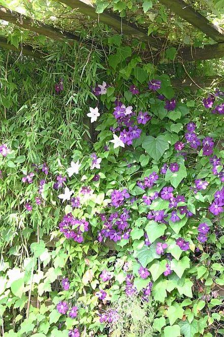 Luxury Struktur und Sichtschutz im Garten mit Hecken und begr nten Rankgittern etc http