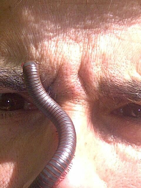 Face to Face with Giant Millipede