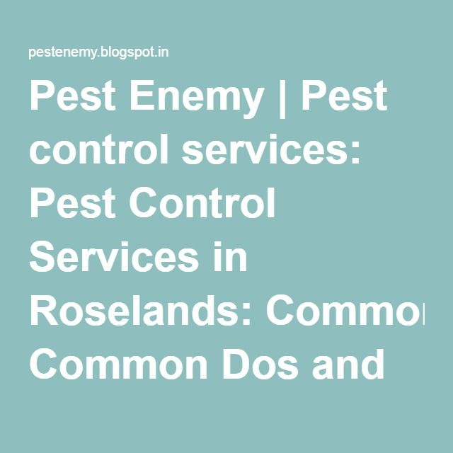 Pest Enemy | Pest control services: Pest Control Services in Roselands: Common Dos and Don'ts