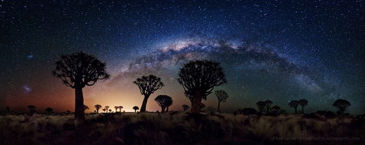 Milky Way Over Quiver Tree Fores